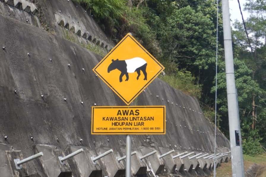 アンシ山付近で見つけたマレーバクの標識
